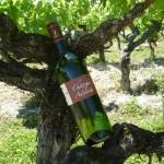Tradition-blanc-sec- vin gaillac blanc - vente vin gaillac